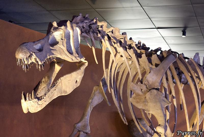 Que serait un muséum sans son dinosaure ?