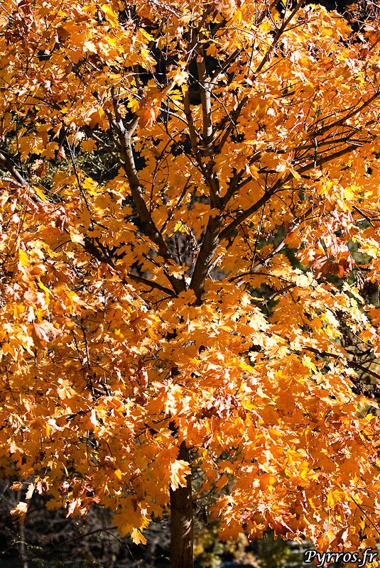 Arbre d'automne en Ariege
