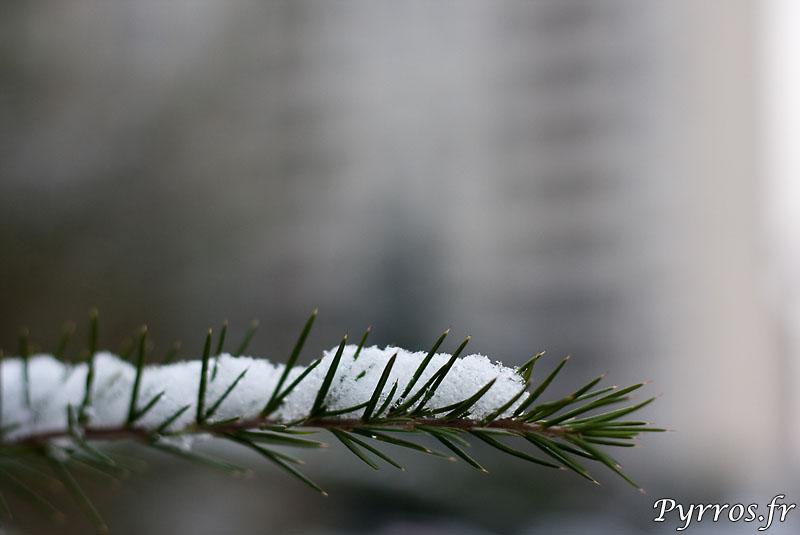 la végétation se couvre de neige.