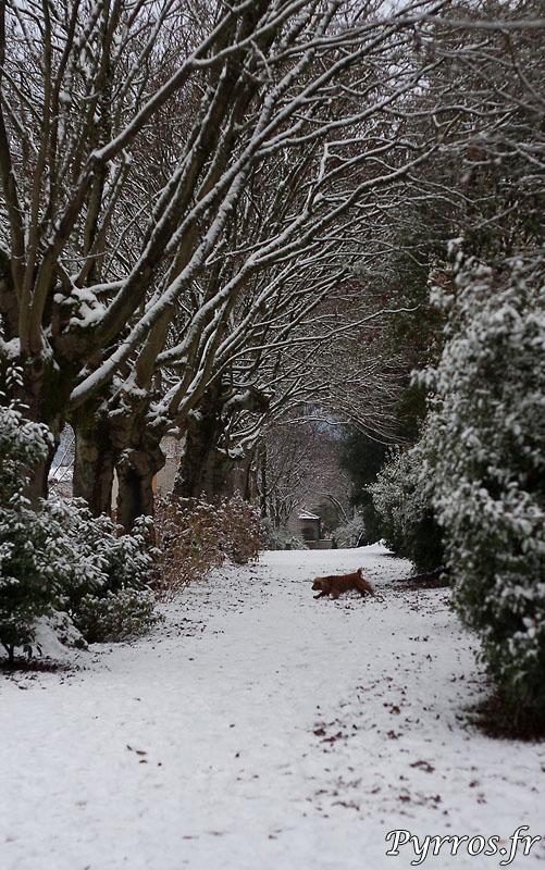 les animaux en profitent et decouvrent la neige.