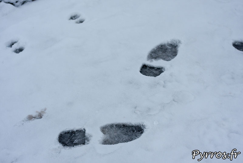 Neige à Toulouse, traces dans la neige.