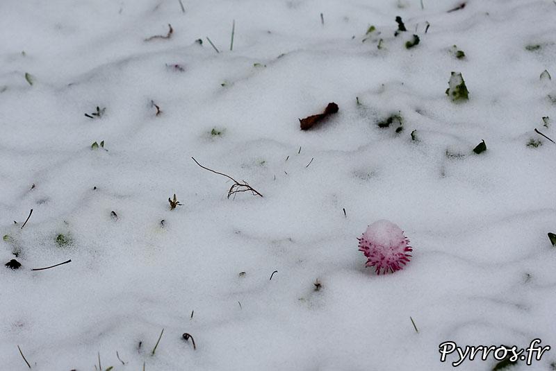 Toulouse sous la neige pour la troisieme fois de l'hiver, la vegetation est sous la neige