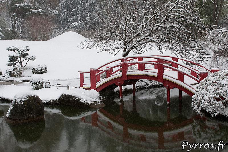 Pour la quatrième fois de l'hiver le plus enneigé depuis 30 ans à Toulouse, au jardin Japonais la flore se prépare deja pour le printemps
