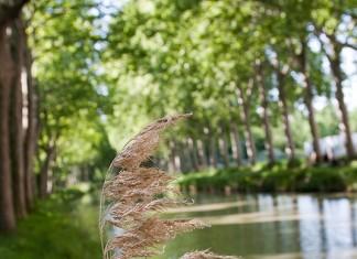 """Le canal du midi. photo proposée pour """"à Toulouse hors série canal du Midi"""""""