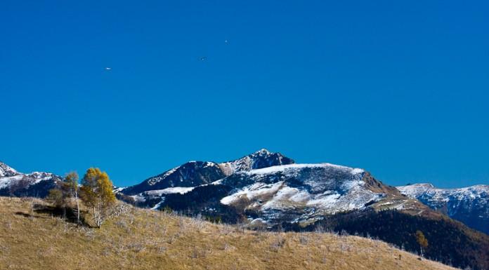 Vautours Fauves survolant les Pyrénées