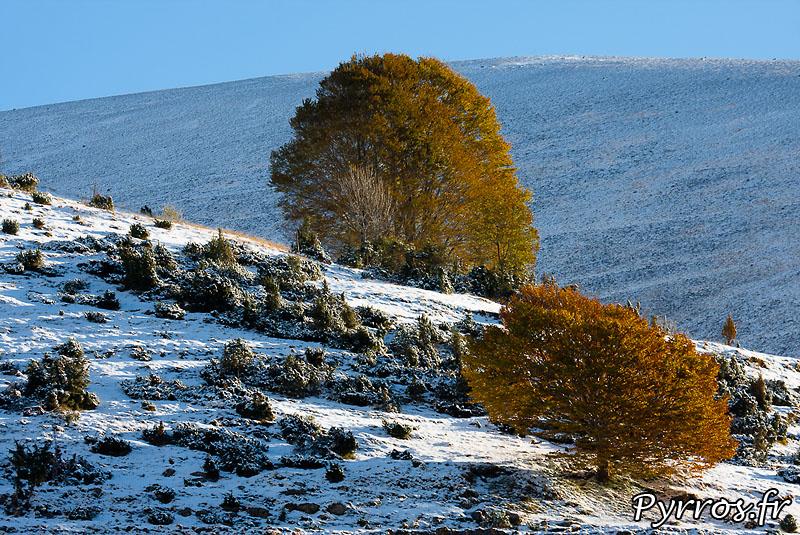 automne 2010, arbres dans la neige