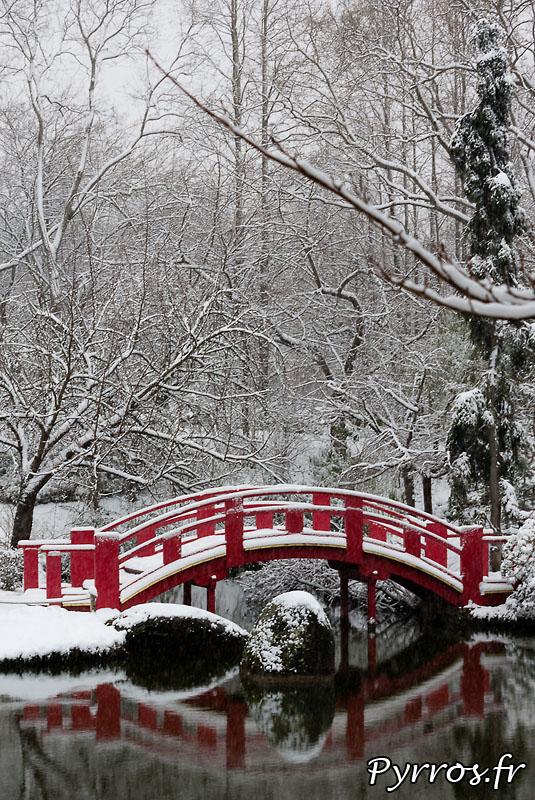 Pour la quatrième fois de l'hiver le plus enneigé depuis 30 ans à Toulouse, au jardin Japonais la flore se prépare déjà pour le printemps