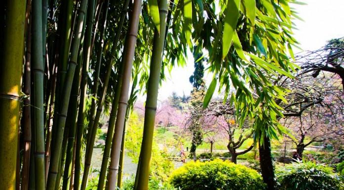 Bambous ambiance asiatique