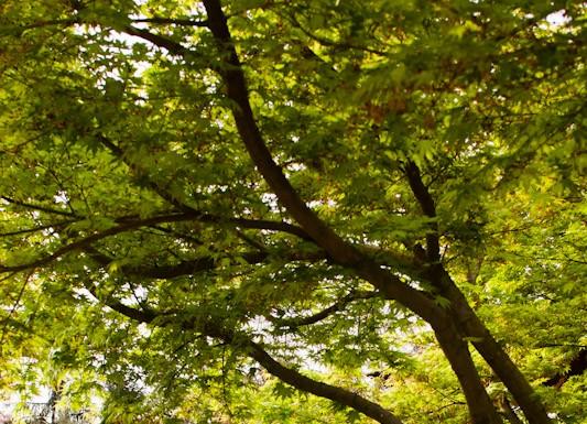 Printemps au jardin Japonais, jardin remarquable à Toulouse