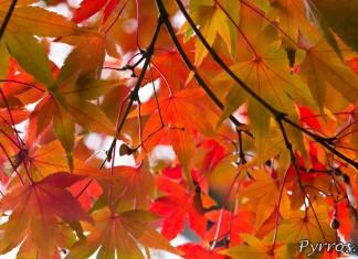 Automne au jardin Japonnais, feuillage d'automne
