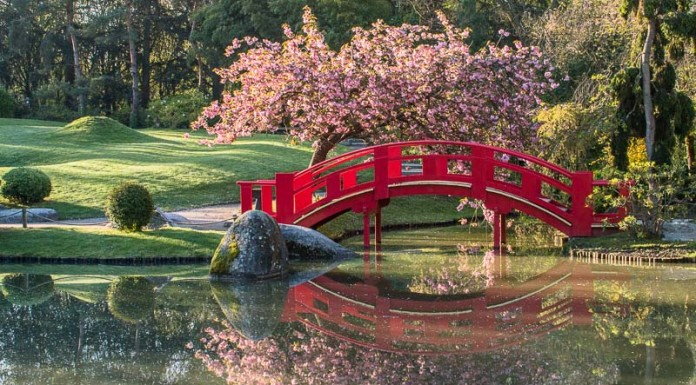 Le pont rouge et le cerisier du Japon (Prunus serrulata) se reflètent dans le lac du Jardin Compans-Caffarelli