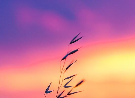 Le soleil se couche sur la plaine toulousaine