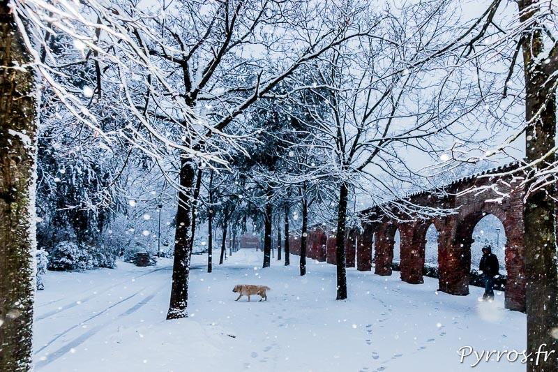 Dans la neige du cloitre des chartreux (Faculté du Capitole) un homme promène son chien