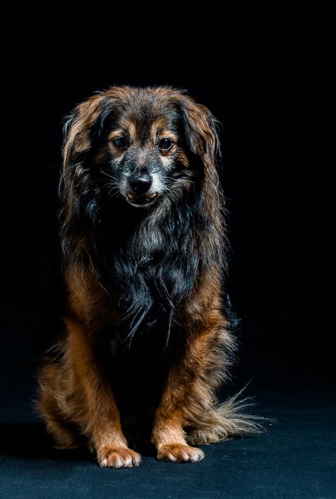 Vichnous petit chien de 7Kg, un peu stressé devant l'objectif