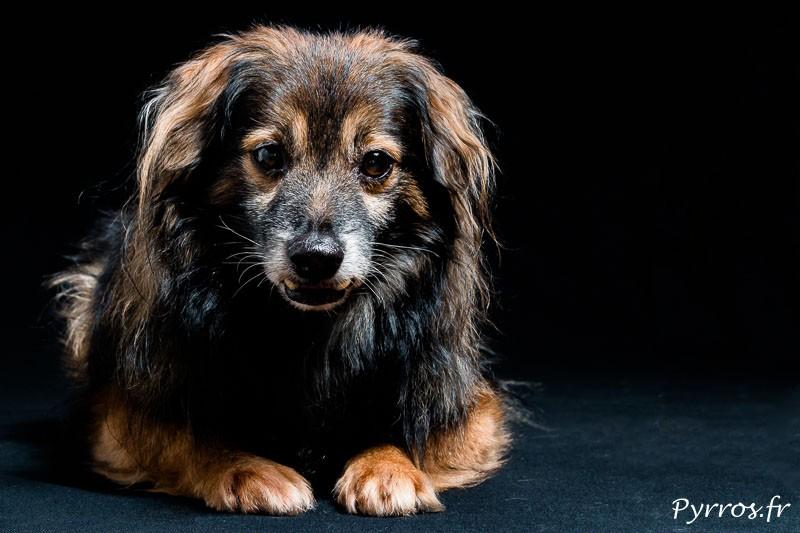 IMG_0016-chien-vichnou