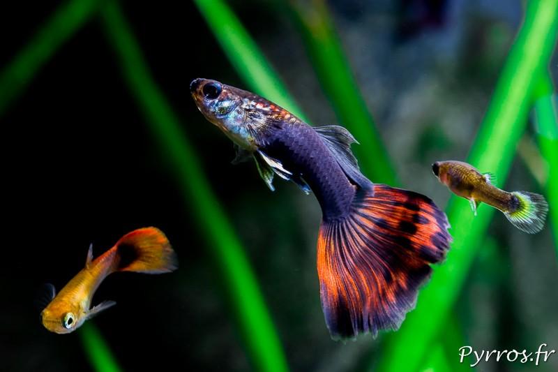 comment photographier les poissons dans son aquarium