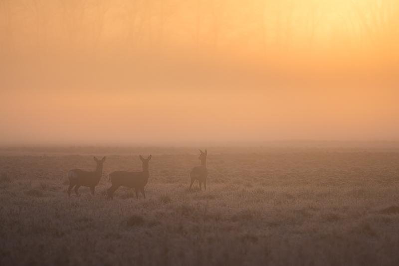 brume et soleil levant offrent souvent une ambiance toute particulière