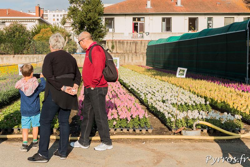 Les visiteurs découvrent les fleurs qui vont etre installées dans les massifs pour l'automne