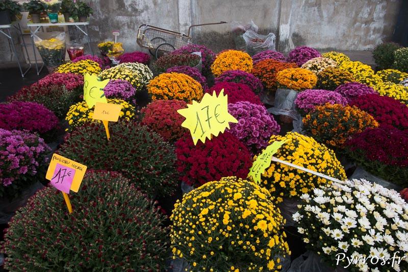 A l'un des nombreux point de vente de Chrysanthèmes les couleurs explosent