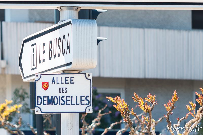 Allée des Demoiselles à Toulouse
