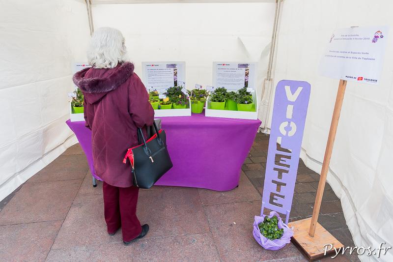 Une personne observe les différentes variétés de violettes présentées pace du Capitole