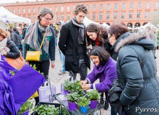 Helene Vié experte en violette de Toulouse donne des conseils aux toulousains pour cultiver la violette