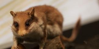 Aujourd'hui exit les longs rayonnages poussiéreux, les animaux reprennent vie pour le plus grand bonheur des visiteurs.