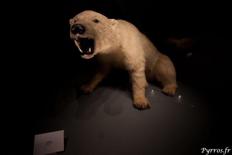 ours blanc en voie d'une disparation symbole du réchauffement climatique, j'espère que les générations futures pourront continuer de rêver en dehors des musées