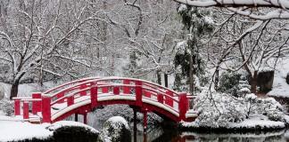 Pour la quatrieme fois de l'hivers le plus enneigé depuis 30 ans à Toulouse, au jardin Japonais la flore se prépare deja pour le printemps