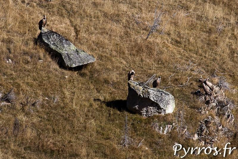 Sur le versant opposé les vautours me surveillent.