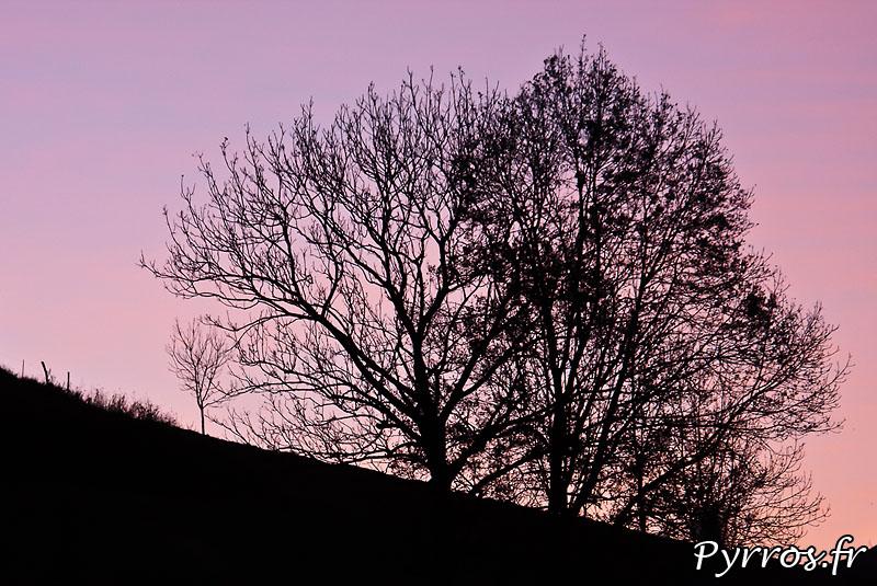 lever de soleil sur arbres de Jurvielle
