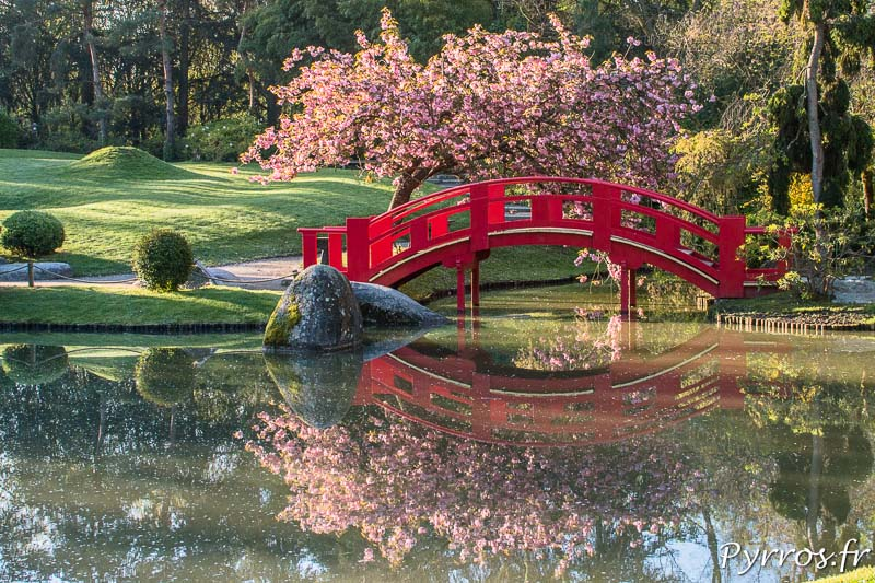 Printemps au jardin japonais de toulouse for Jardin japones toulouse