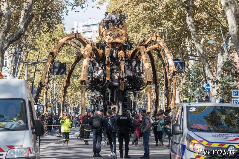 Sous les platanes l'araignée géante se déplace à Toulouse