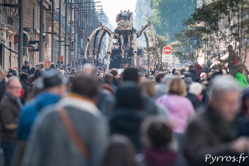 Les spectateurs sont nombreux pour voir l'araignée géante