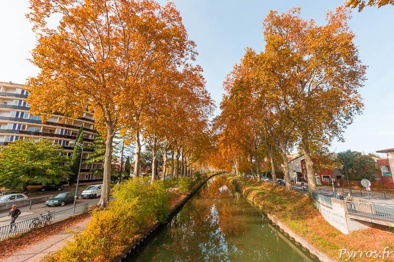 A Toulouse les platanes deviennent oranges quand l'automne arrive
