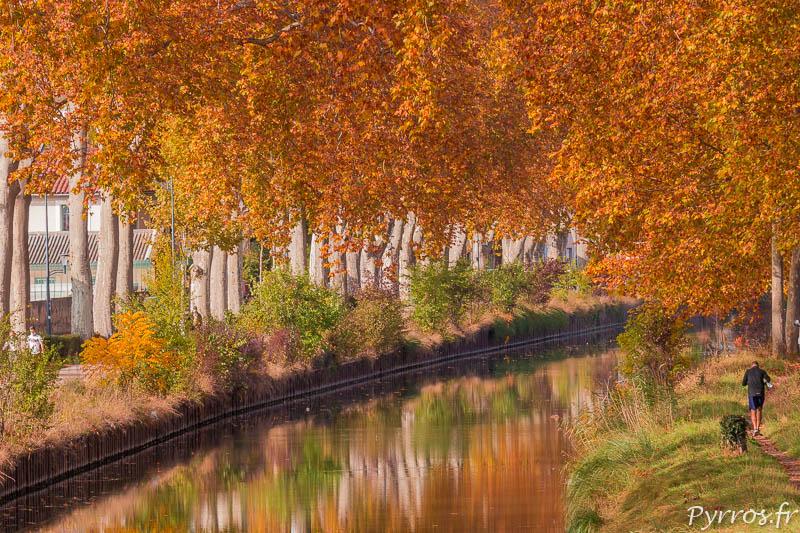 Les Canal du Midi attire les sportifs qui viennent s'entrainer meme en automne