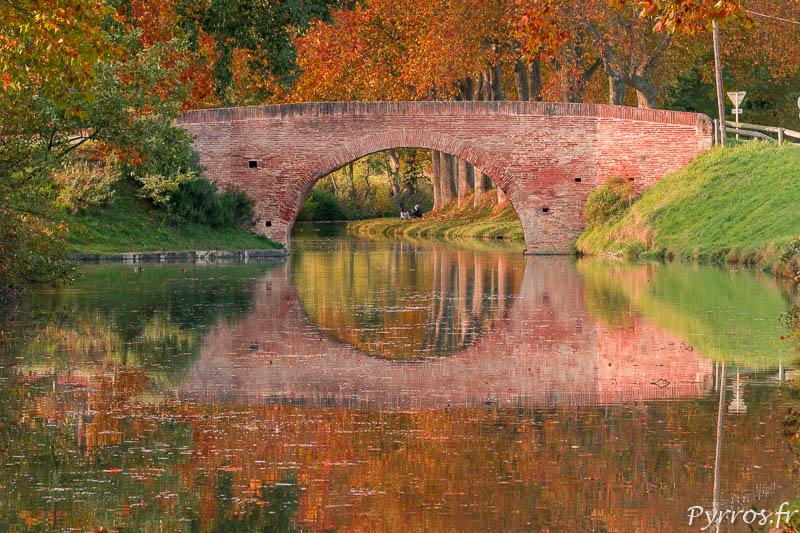Les platanes du Canal du Midi deviennent oranges à l'approche de l'Automne